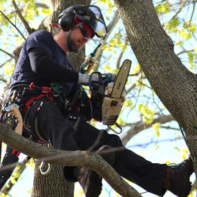Tree Climber Specialist | TCIA - Advancing Tree Care Businesses
