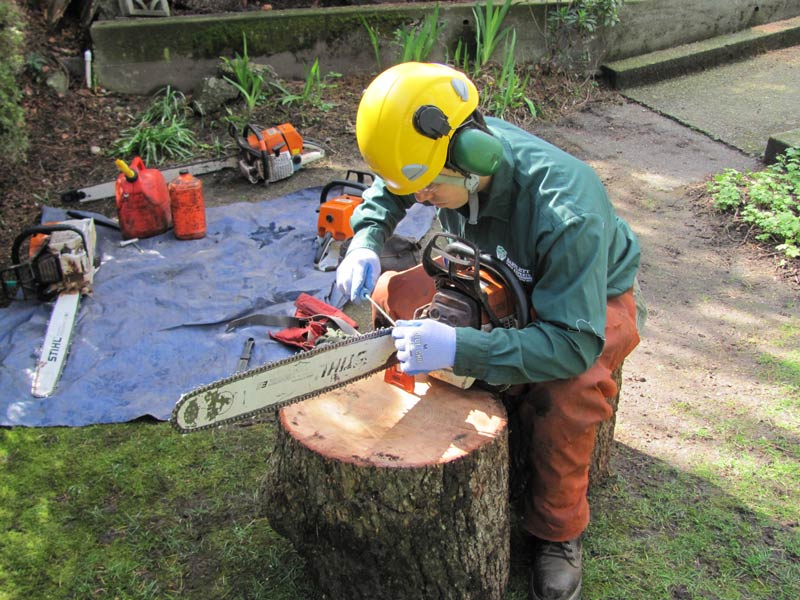 Tree worker inspecting a chain saw